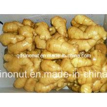 Hot Sales Good Quality Fresh Ginger