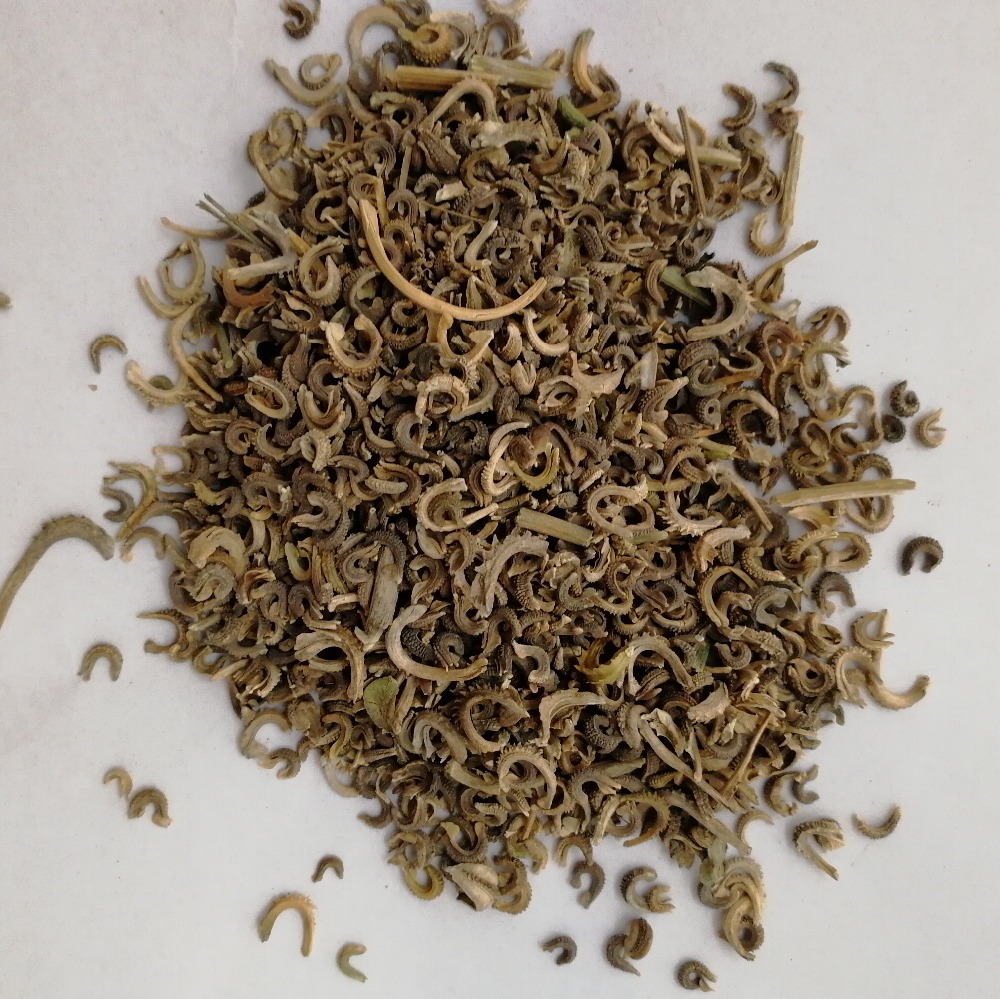 High budding rate and beautiful Calendula officinalis seeds