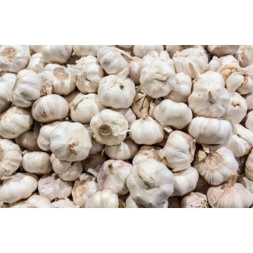 New Crop Fresh and Good Quality solo bawang putih