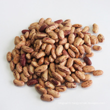 Hot Sale Red Kidney Beans with Export Light Speckled Kidney Beans