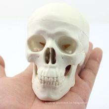 SKULL08 (12334) Mini modelo de cráneo con valor artístico, modelo de juego de manos, modelo de cráneo anatómico preciso para ciencias médicas