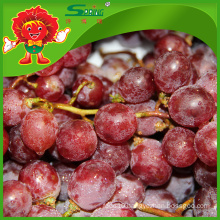 Factory supply sweet red grapes for sale
