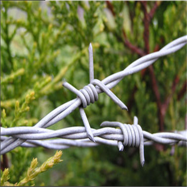 twin barbed wire