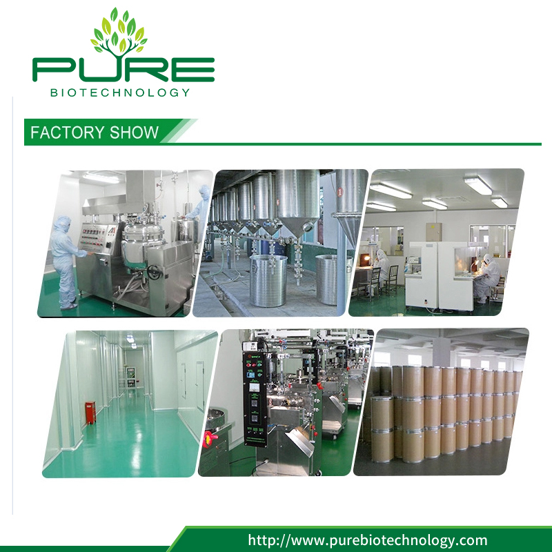 Organic wheat grass powder factory