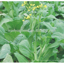 PK22 The no.2 white pakchoi shum seeds, different types of vegetable seeds for sale
