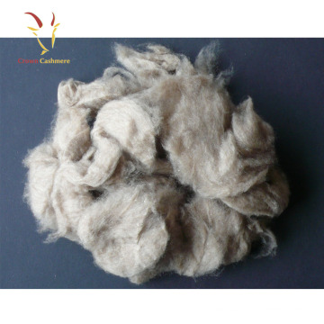 Mongolian Cashmere Fabric Top Raw Sheep Wool For Sale