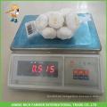 Neue Zucht Chinesische frische natürliche Knoblauch