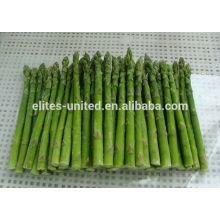 Légume d'asperges frais congelé IQF chinois