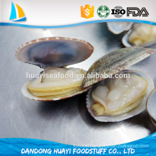 frozen boiled short necked clam shell on free of sand