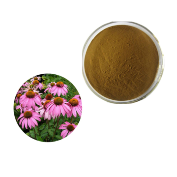 Water Soluble Herbal Extract Echinacea Purpurea Powder