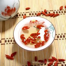 Baixo Pesticida Goji Berry / Ningxia wolfberry com bom gosto