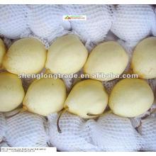 frische chinesische ya Birne mit dem besten Preis