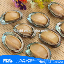 Wholesales nutrition abalone in shell