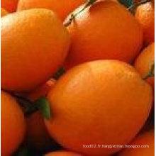 Nouveau nombril orange