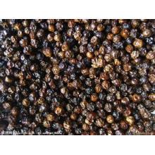 Oleoresina de pimenta preta natural de 100%