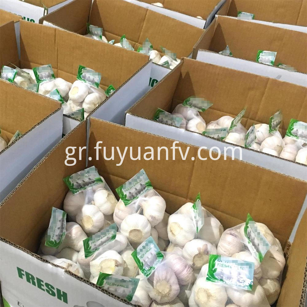 Normal White Garlic To Norway