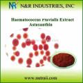Pure natural astaxanthin powder in india astaxanthin oil