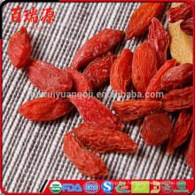 Goji berry r chinese goji berries lycium barbarum goji coltivazione