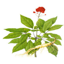 FDA 100% soluble dans l'eau Panax Ginseng Extract HPLC