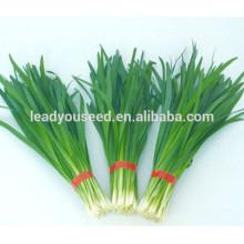 MLE01 Bendi início maturidade híbrido alho-poró sementes, cebolinha chinesa sementes