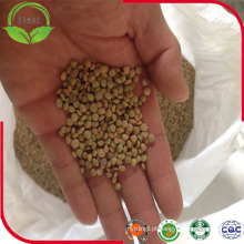 Lentilhas verdes secas ou cozidas