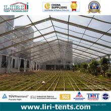 25m Isolierung Klare Dachzelte als Gewächshaus für Gemüse verwendet