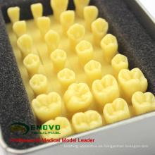 VENDER 12574 Agrandar 1.2x Talla de la Corona Preparar Dientes de Resina Diente