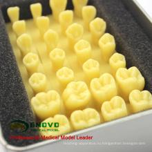 Продать 12574 увеличения 1.2 x Корона резьба по подготовке смолы зубов зубов