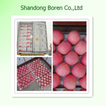 Supply Shandong Fresh Red FUJI Apple