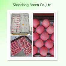 Fornecimento Shandong Fresco Vermelho FUJI Apple