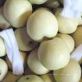 Nouvelle saison fraîche poire d'or / poire de couronne de Chine