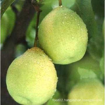Fresh Delicious Chinese Green Ya Pear Hot Sale