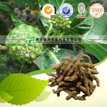 Medicina sexual Materia prima Indianmulberry (raíz)