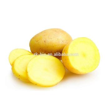 Precio de almidón de patata orgánica competitiva