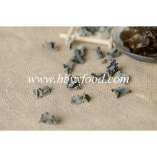 Arbre séché chinois champignon vert noir en vrac