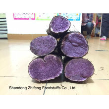 Fresh 2015 Chinese Purple Yam with Exporting Quality
