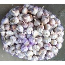 New Crop Fresh Red Garlic