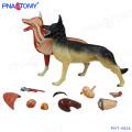 PNT-0824 New design animal model whole Dog anatomical model
