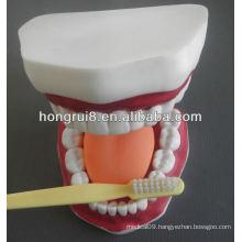 New Style Medical Dental Care Model,dental care model (32 teeth)