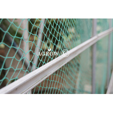 Orchard Anti-Bird Netting Protection Systems