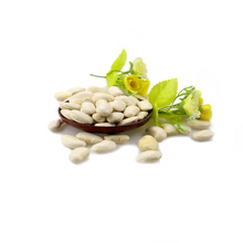 Types of white kidney beans Long Shape Crop 2017