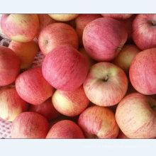 Exporter la qualité standard de la pomme Qinguan fraîche
