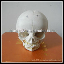 ISO Anatomisches Säuglingsschädelmodell, Anatomisches Schädelmodell