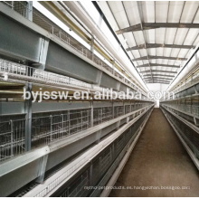 Huevo gallina puesta de equipos avícolas para la venta en Filipinas