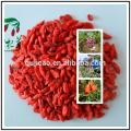 neue Ernte Goji Wolfberry Frucht Goji Beere Ningxia Goji Chinesische Kräutermedizin Wolfsbeere
