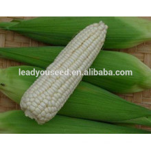MCO05 Nuo high production hybrid waxy corn seeds for planting