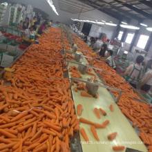 Органическая морковь Свежая морковь