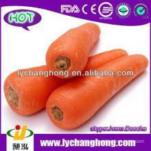 2014 New Crop Fresh Carrot from China,Xiamen