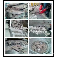 Frozen Seabass Fillet Fish