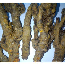 El sistema digestivo coptis